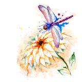 Water color dragonfly with lily flower Royalty Free Stock Image