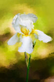 Water color drawing of  Iris flower Royalty Free Stock Images