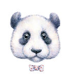 Water color drawing of a panda on white background.  Stock Images