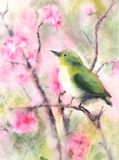 Water color drawing of a small green bird Stock Photos