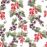 Water color pattern with berries red and black currant. Stock Images