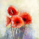 Water color red poppy flowers painting. Flowers in soft color and blur style for background. Vintage painting flowers Stock Photography