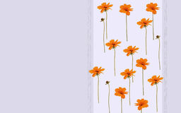 Water colored orange flowers on violet or green background. Water colored orange flowers on the violet or green background Stock Photography