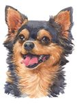 Water colour painting of Chihuahua 063. Chihuahua is a small dog. Both short and furry There are about 1-3 kg of weight stock photo
