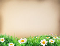 Water colour paper with grass and flowers on it. Royalty Free Stock Photo