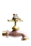 Water conservation. Save water. tiny green tree frog perched on top of a standard outdoor faucet. isolated on white stock photos