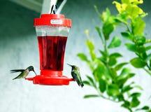 Water cooler talk. Hummingbirds gather around a feeder stock photos