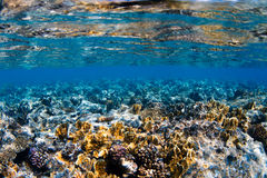 Water & Corals Stock Image