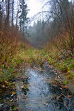 Water course in wood in autumn. Stock Photos