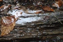 Water coverd boom stock afbeeldingen