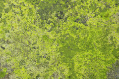 Water covered marsh mud  background Stock Images