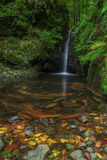 Water creek. On autumn forest with m Stock Image