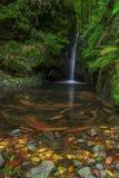 Water creek stock image