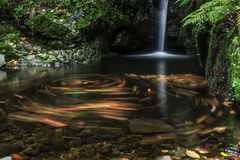 Water creek. On autumn forest with m Stock Photos