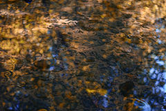 Water in the creek fall Royalty Free Stock Images