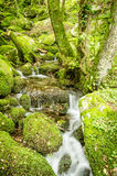 Water creek in a forest Royalty Free Stock Photos