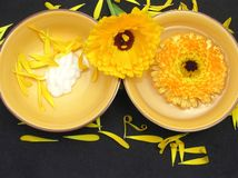 Water and creme of marigold Royalty Free Stock Photography