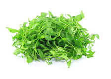 Water cress Stock Photos
