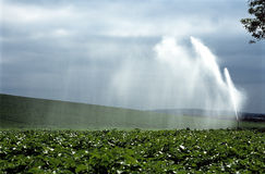 Water Crop Spraying. Stock Image