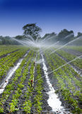 Water crops irrigation stock image