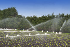 Water crops irrigation Royalty Free Stock Images