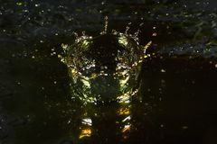 Water crown. High speed photography of water crown stock photo