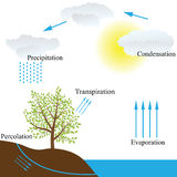 Water cycle in nature. Vector schematic representation of the water cycle in nature Stock Image
