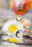 Water Daisy. Royalty Free Stock Image