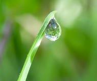 Water-daling op blad stock foto