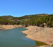Water dam amidst pine forest Royalty Free Stock Photography