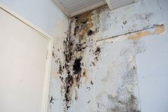 Water damage causing mold growth on the interior walls of a property royalty free stock image