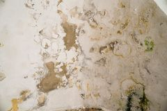 Water damages and mold on the ceiling in the Mamluks on the Temple Mount in Jerusalem. History stock photos