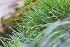 Water dat over gras stroomt royalty-vrije stock foto's