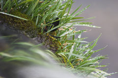 Water dat over gras stroomt Stock Fotografie