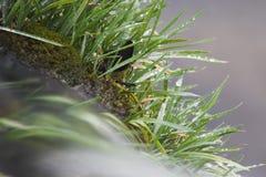 Water dat over gras stroomt stock fotografie