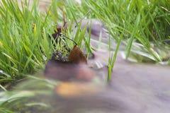 Water dat over gras stroomt stock foto's