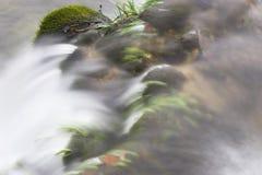 Water dat over vegetatie stroomt royalty-vrije stock fotografie