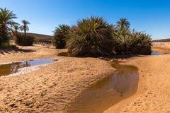 Water in de oase, de woestijn van de Sahara royalty-vrije stock fotografie