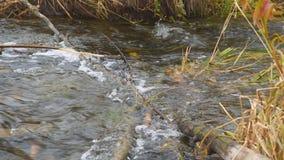Water in de stroomstromen door een houten hindernis stock video