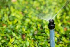 Water de struiken stock foto's