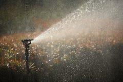 Water de tuin Royalty-vrije Stock Afbeeldingen