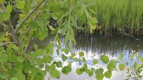 Water in de zomer stock video