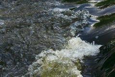 Water details. Of river Sazava - rock vegetation Stock Photography