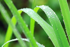 Water dew drops Royalty Free Stock Photo