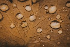 Water Dew On Leaf Macro Photography Stock Photos