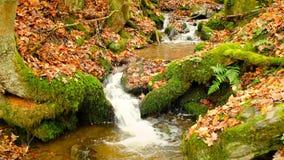 Water die in een kleine kreek tijdens de herfst stromen stock footage