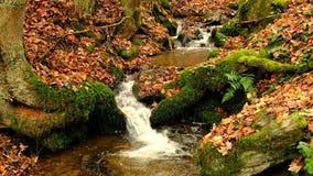 Water die in een kleine kreek tijdens de herfst stromen stock videobeelden