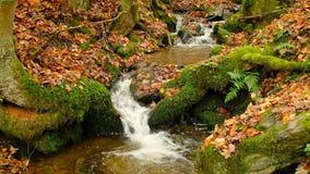 Water die in een kleine kreek tijdens de herfst stromen stock video