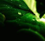Water die onder een blad genieten van stock afbeelding