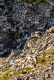 water die over rotsachtige grond in vulkanisch landschap dichtbij regenachtiger lopen stock foto's